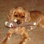 Dylan's Doggie Bday~
